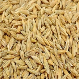 BULK ORGANIC BARLEY WHOLE (JAU)